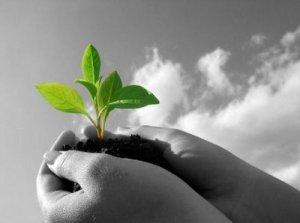 pianta-seme