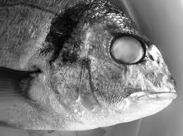 pesce-marcio