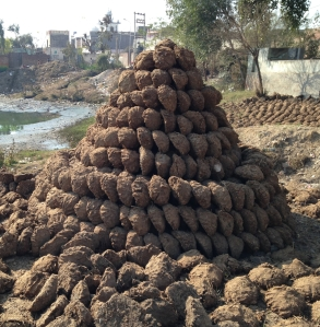 A_Pile_of_Dung_Cakes