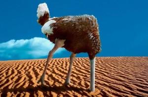 ostrich head in sand